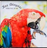 Kuş Dünyası Pet Shop Bornova