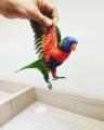 Papağan Dünyası Ümraniye